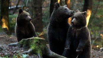 Rewilding Experience Transylvania Romania Bears